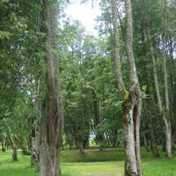 Nītaures muižas parks
