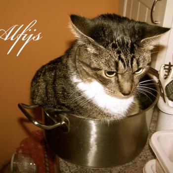 Runā Kaķis
